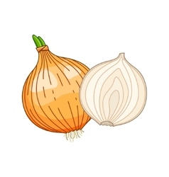 Onion colored botanical vector