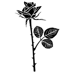 Rose flower bud vector