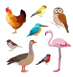 Colorful realistic bird collection vector