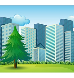 A big pine tree growing near the tall buildings vector image vector image