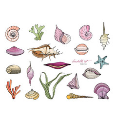 hand drawn seashells collection colorful vector image vector image