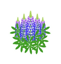 Lupine flowers isolated on white vector