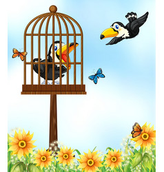 two toucan birds in garden vector image