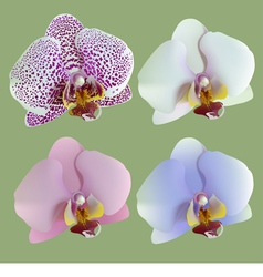 Four isolated flowers of orchids vector