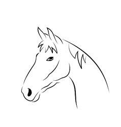 Outline head horse isolated on white background vector image vector image