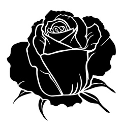Rose one vector