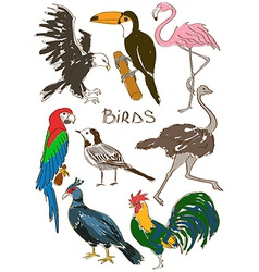 Set of isolated birds vector