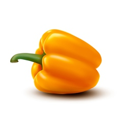 Fresh yellow pepper vector image