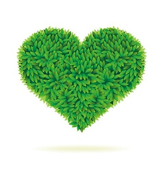 Heart symbol in green leaves vector image vector image