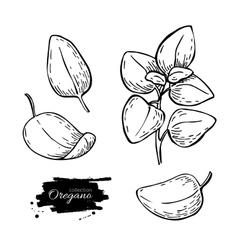 Oregano set drawing Isolated Oregano plant vector image