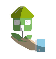 Green house plant with leaves in the hand vector