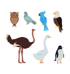 Owl dove blue parrot eagle ostrich goose penguin vector