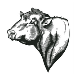 head of bull of dangus breed drawn in vintage vector image