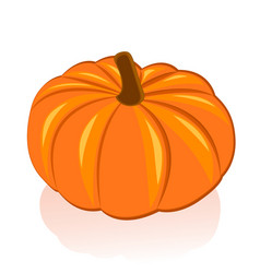 Ripe pumpkin on white background vector