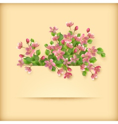 Floral greeting card pink cherry blossom flowers vector