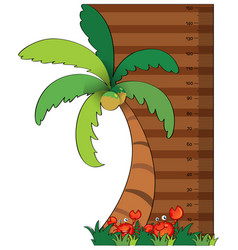 Height measurement chart with coconut tree vector