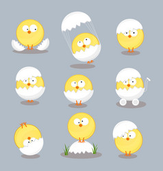 Set from chicken in shell on white background vector