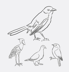 Bird poultry animal hand drawing style vector