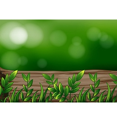A big trunk with plants vector image