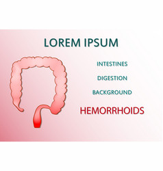 intestine bowel hemorrhoids vector image