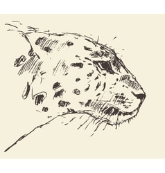 Leopard head style hand drawn sketch vector