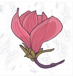 Magnolia flower vector