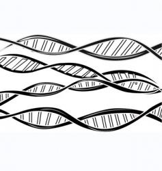 dna model vector image