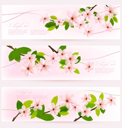 three spring pink borders with pink blossom vector image