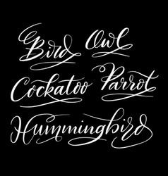 Hummingbird hand written typography vector