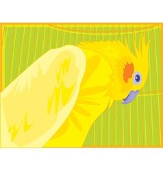 perrot c1 vector image vector image