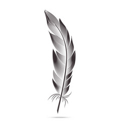 black and white feathers graph contour vector image vector image