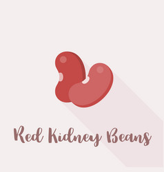 red kidney beans vector image