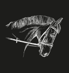 Horse head with bridle vector