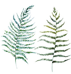 Watercolor fern leaves vector