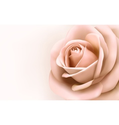 Background with beautiful pink rose vector