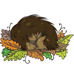 Hedgehog hibernating during winter in pile of leav vector