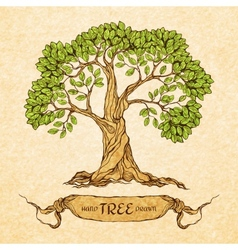 Green tree with place for text vector image