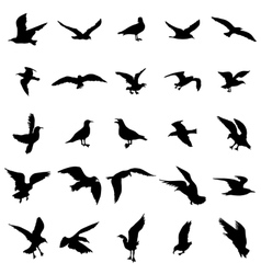 Gull silhouettes set vector image