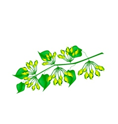 Fresh cowslip creeper flower on white background vector