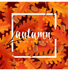 Autumn background with oak leaves and acorns vector image vector image