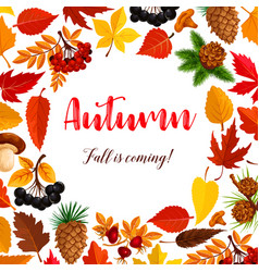 Autumn poster of leaf fall or forest berry vector