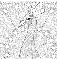 Peacock with feathers in zentangle style freehand vector