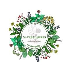 Hand drawn herbs and leaves label basil vector image