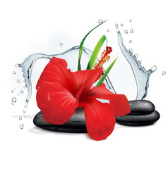 Hibiscus flower grass water splash and zen stone vector