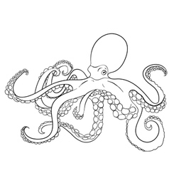 Octopus with high details vector