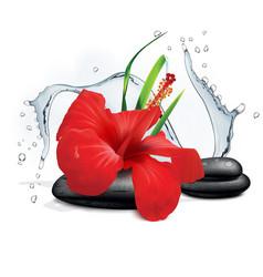 hibiscus flower grass water splash and zen stone vector image vector image