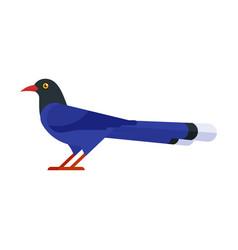 Taiwan blue magpie vector