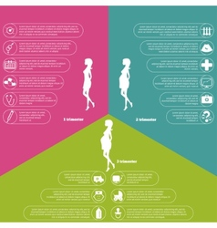 Pregnancy and birth infographics and stages vector