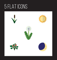Flat icon nature set of solar cattail berry and vector