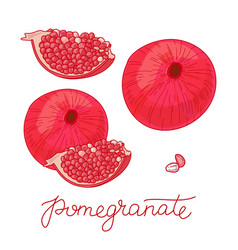 pomegranate fruit set vector image vector image